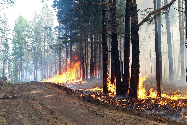 Feu de forêt à Buryat en Sibérie, le 10 juillet 2020, Getty Images