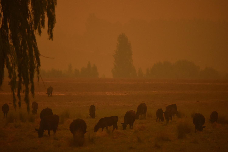 Ciel orange à Towamba, à 20 km d'Eden, New South Wales., PETER PARKS / AFP