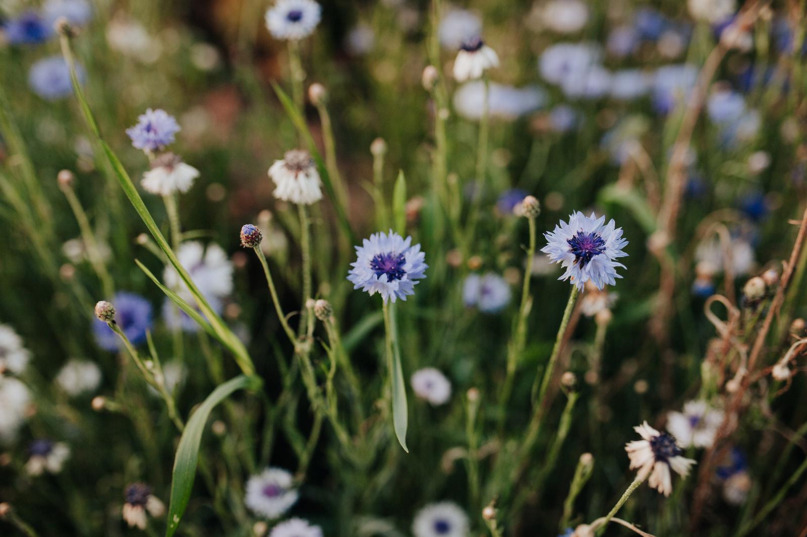 Marie Poppies, fleurs belges, durables et de saison., DR
