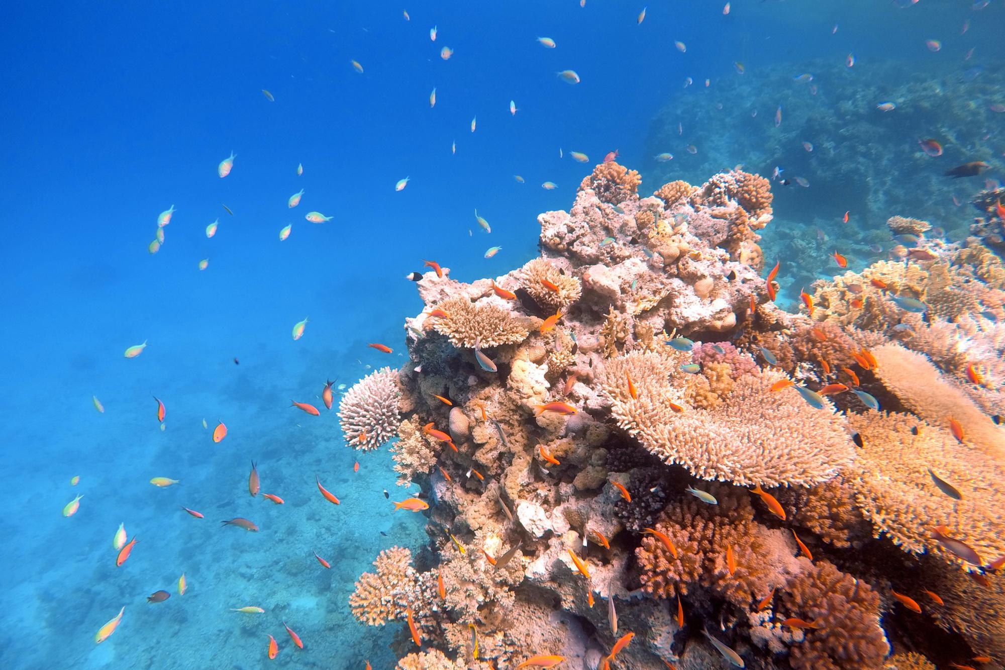 Under the sea, iStock