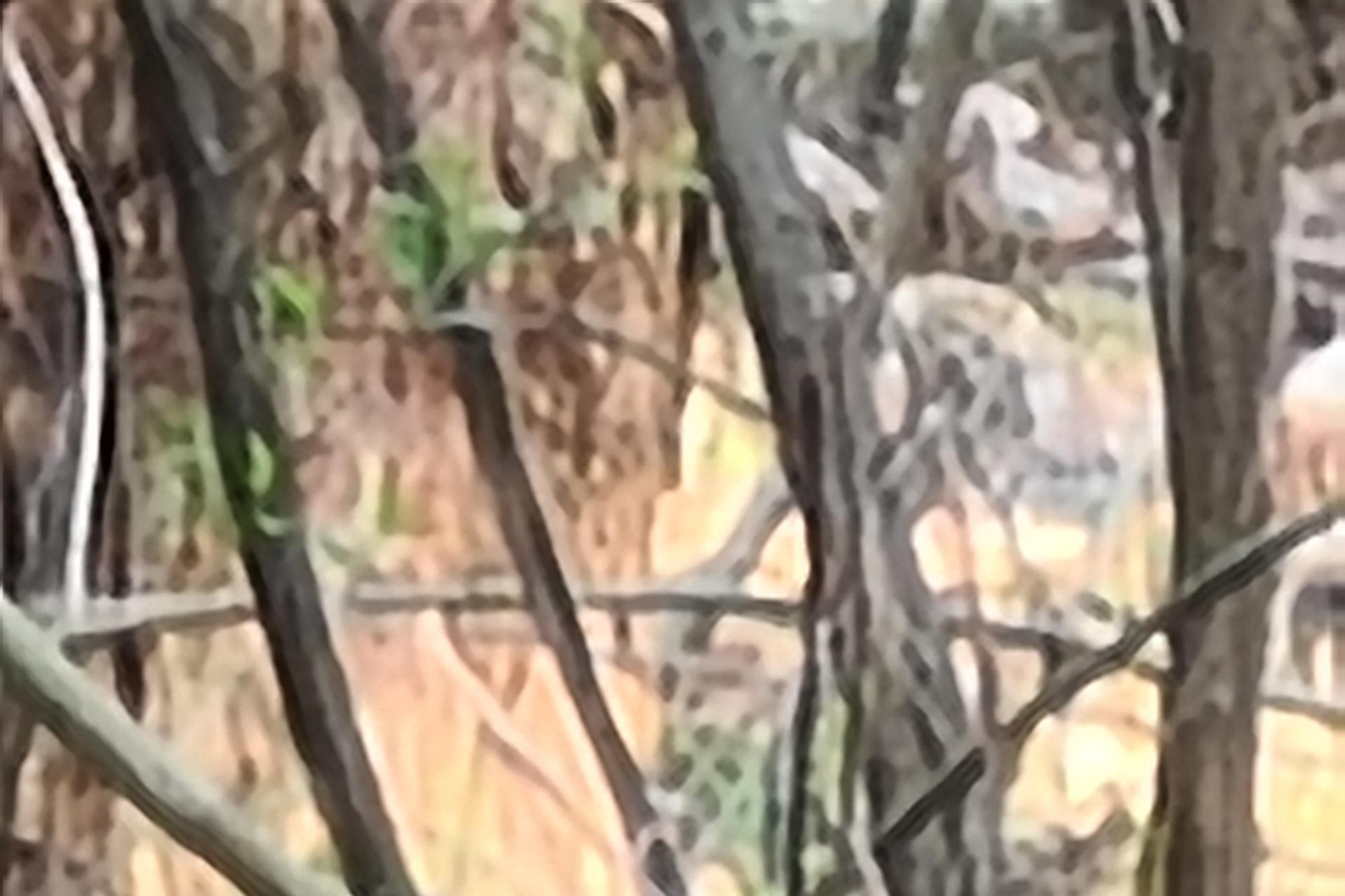 Met 100X zoom is het lastig door de bomen het bos nog te zien., PVL