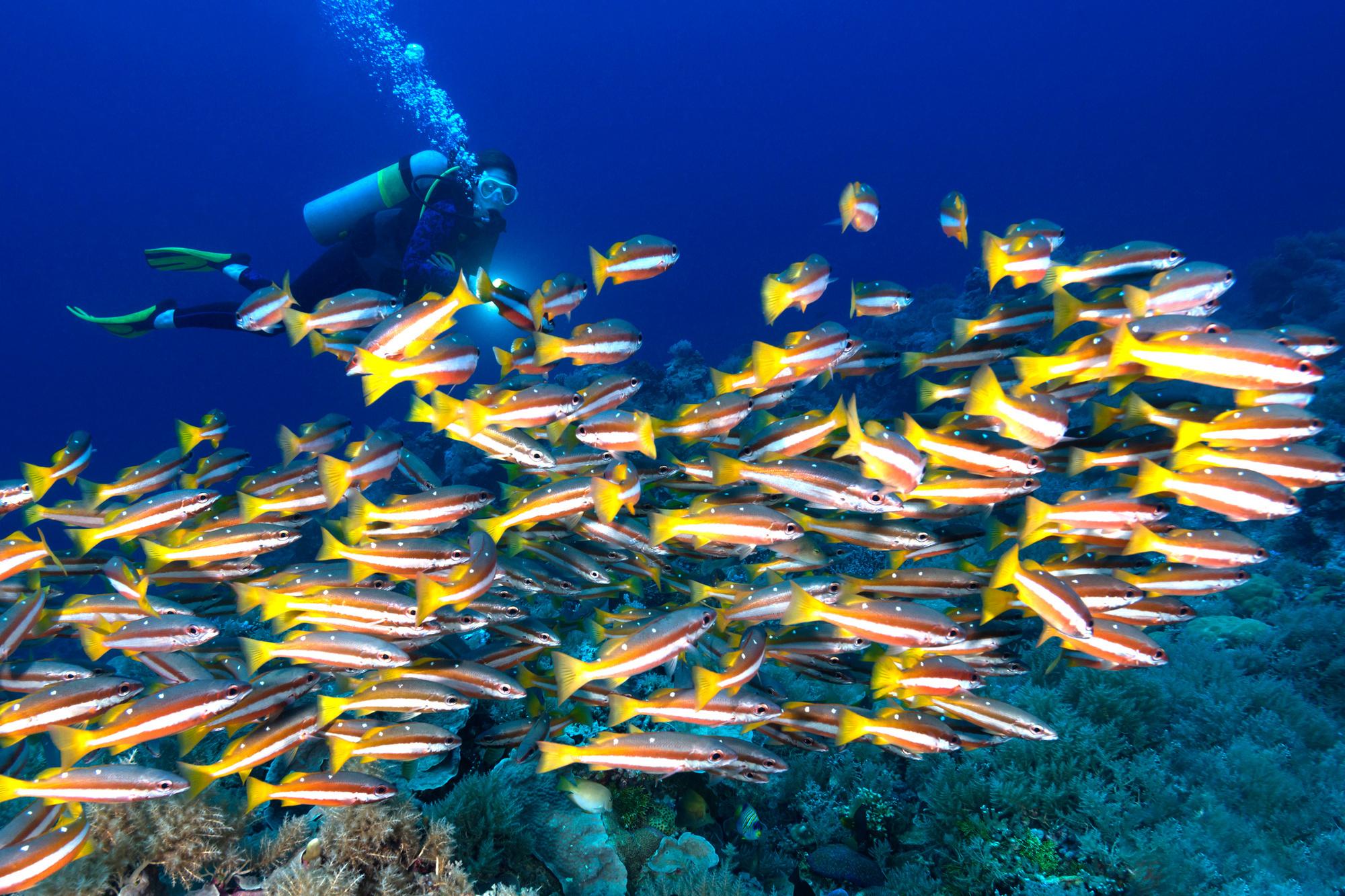 Duiktoerisme is erg populair in Palau, Getty