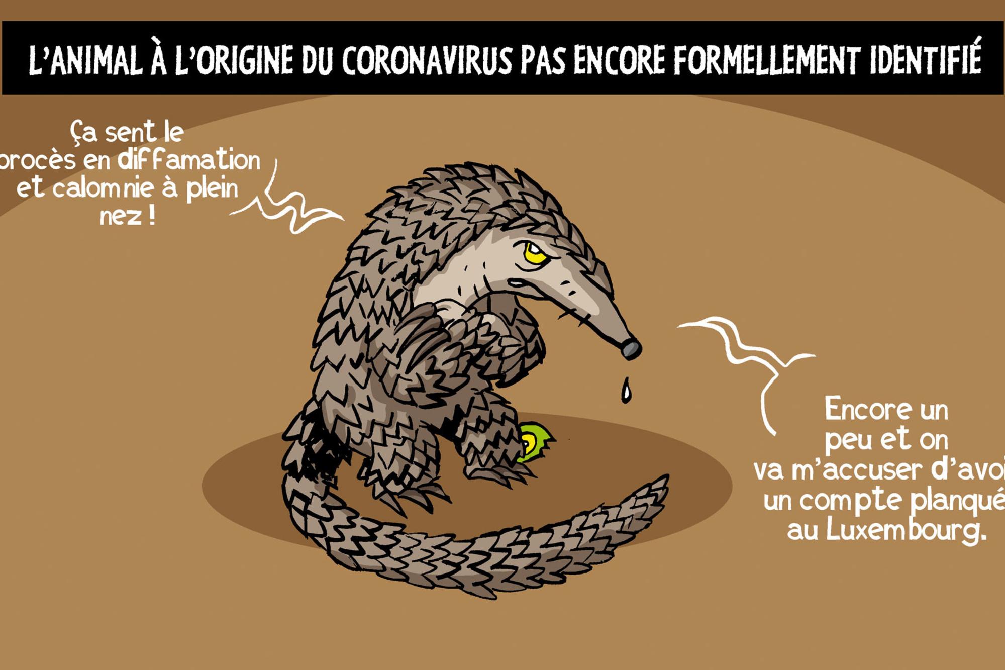 Pour l'OMS, le pangolin n'est pas forcément à l'origine du coronavirus., Vadot
