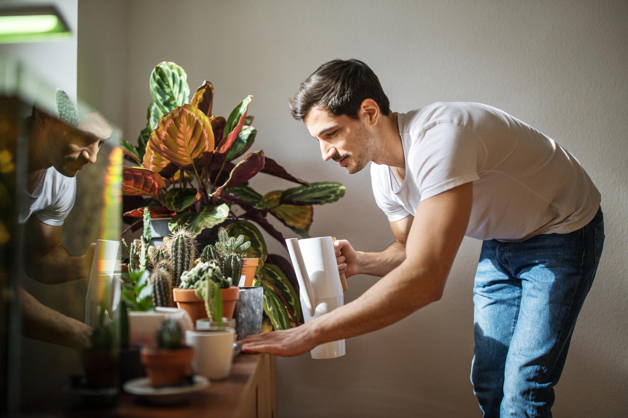 Je kan heus meer doen thuis dan enkel de planten zien groeien. , Getty
