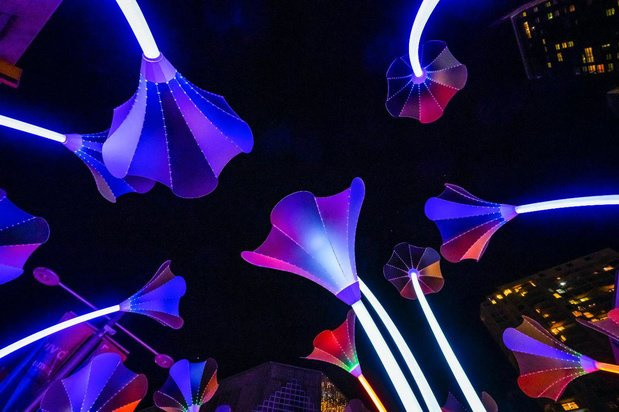 Trumpet Flowers, place Fontainas., Brussels by Lights