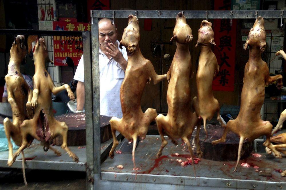 Yulin, théatre du Festival de la viande de chien, en Chine, Reuters