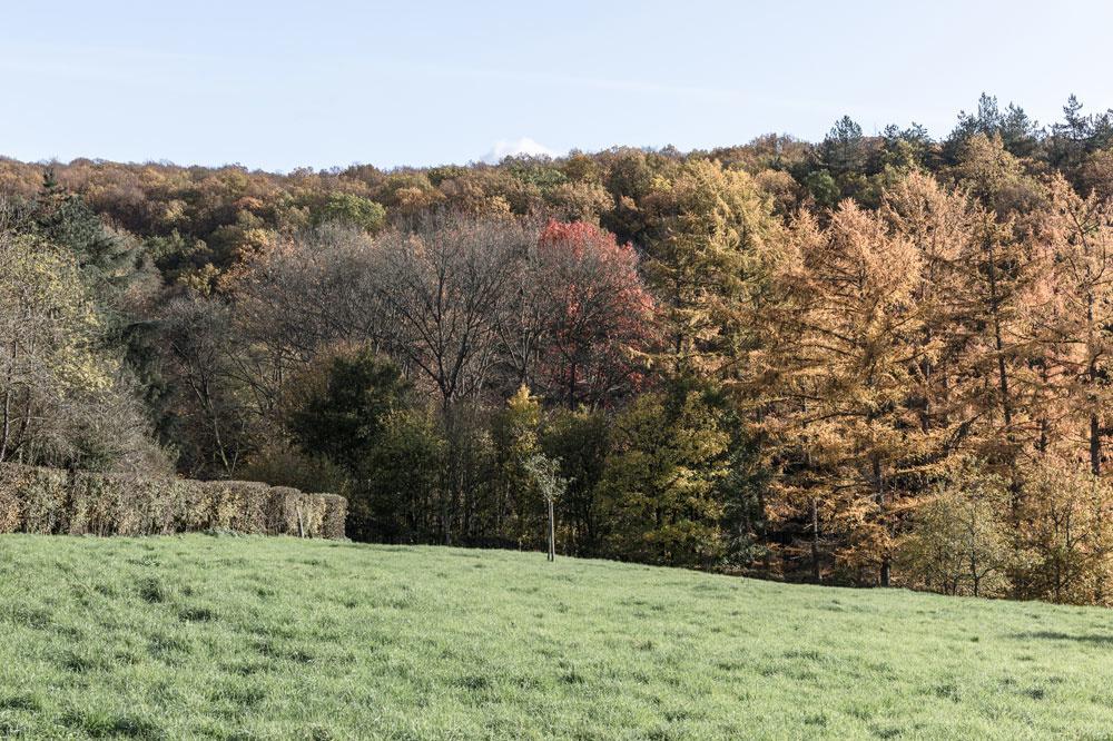 Het domein van Ardennen: 4821 hectare bossen., Alexander Dumarey