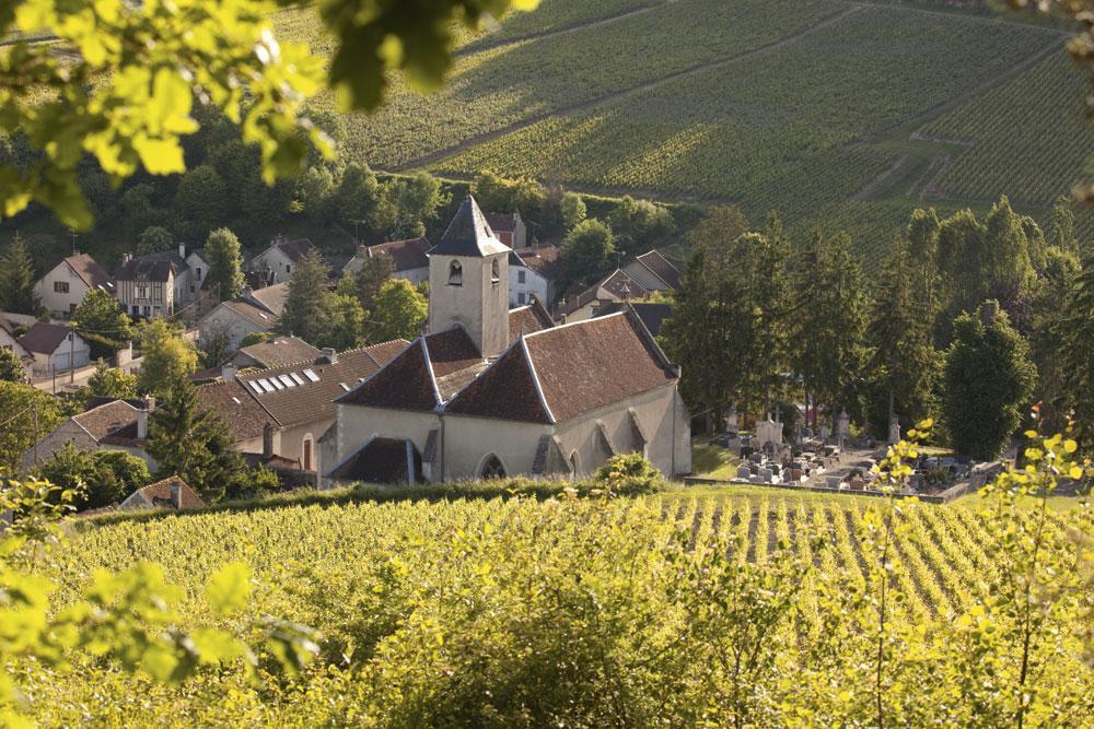 Le joli vignoble de Côte des Bar., Nicolas DOHR