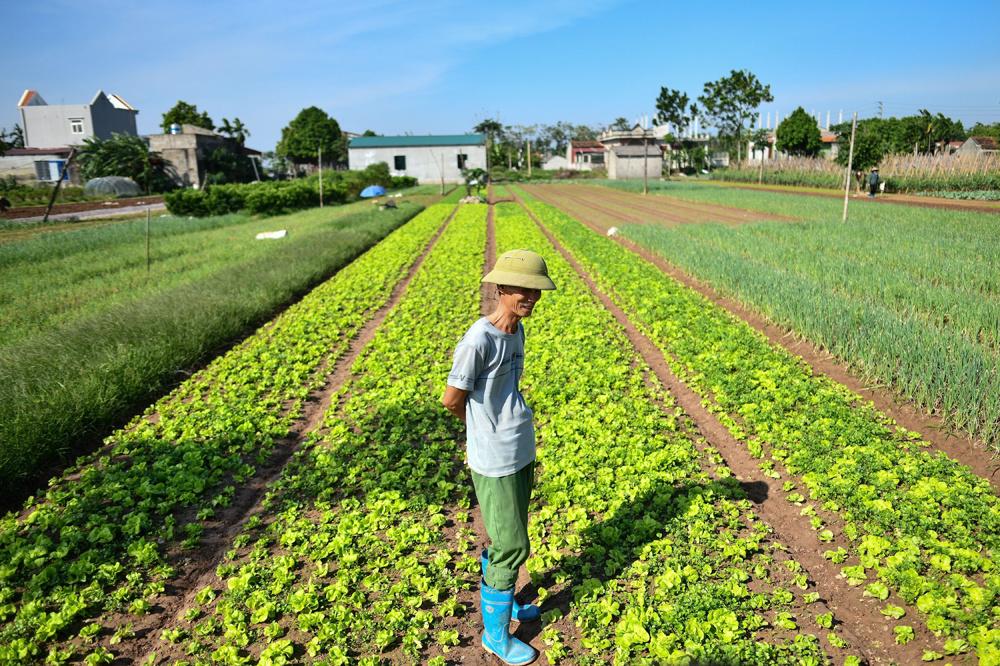 """La ferme Cat Lai Co-op, qui applique des méthodes agricoles """"safe"""", AFP"""