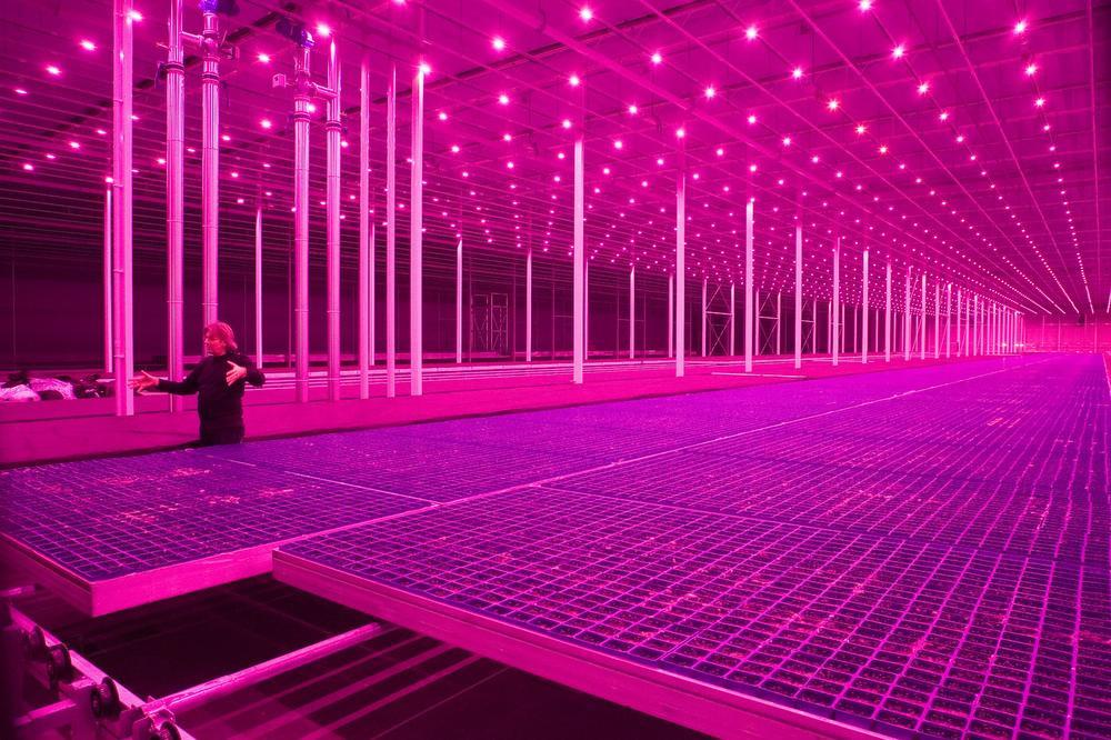 Rem Koolhaas onderzoekt de toekomst van het natuurlijke landschap in het Guggenheim Museum., GF / Pieternel van Velden