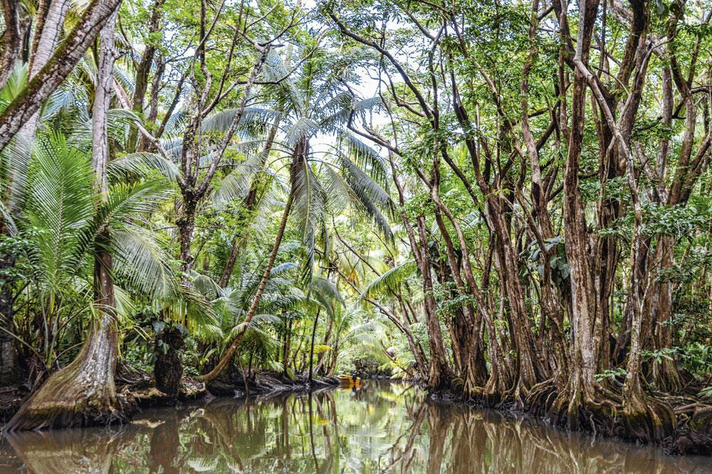 De Indian River in het regenwoud was een van de filmlocaties van 'Pirates of the Caribbean. Dead Man's Chest'., Getty Images