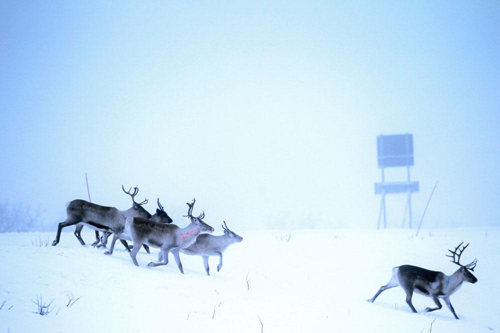 A la frontière finlandaise, Belga