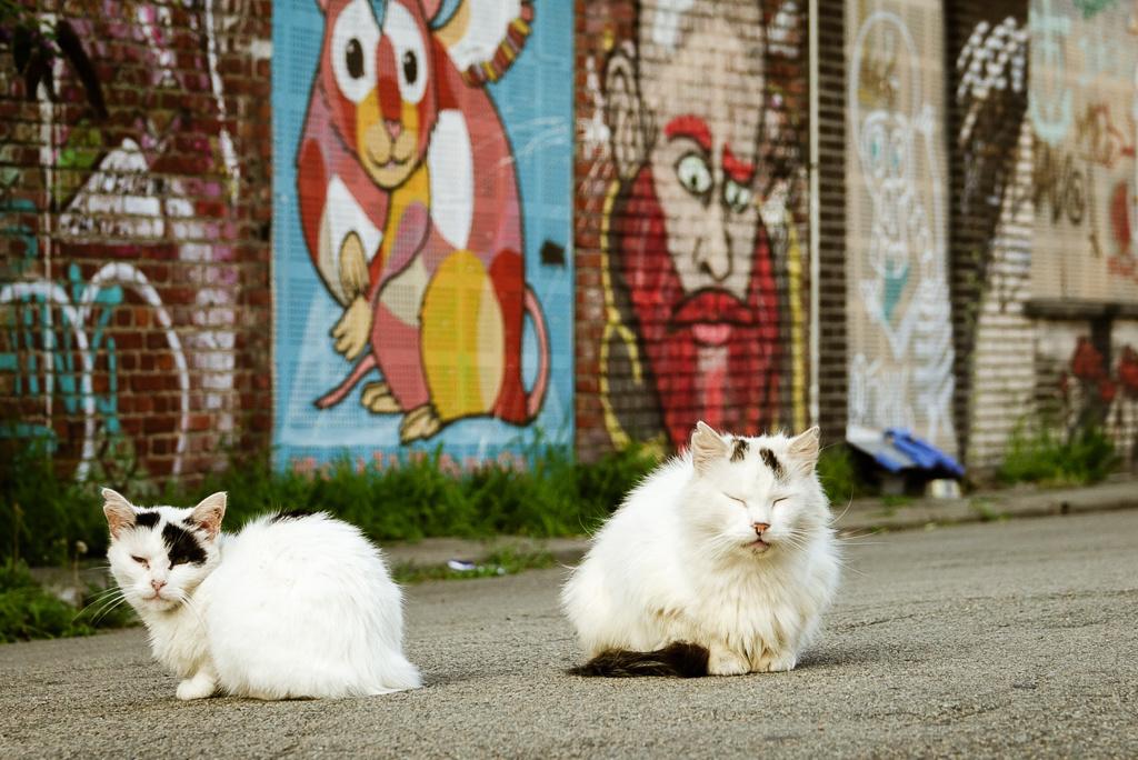 Er dolen bijna evenveel zwerfkatten als inwoners rond., Mare Hotterbeekx