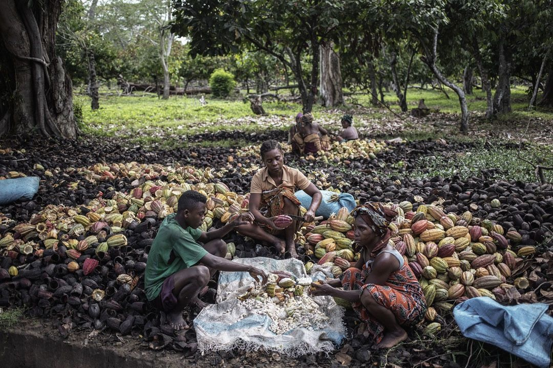 Récolte à Madagascar, AFP