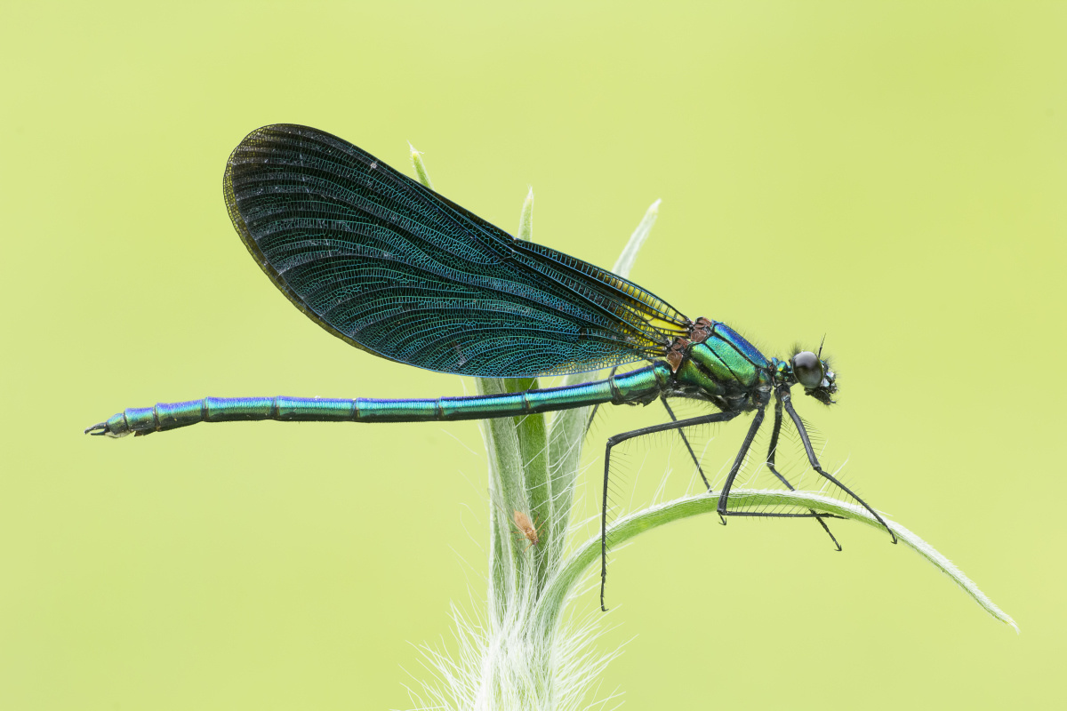 Libelle, Getty Images