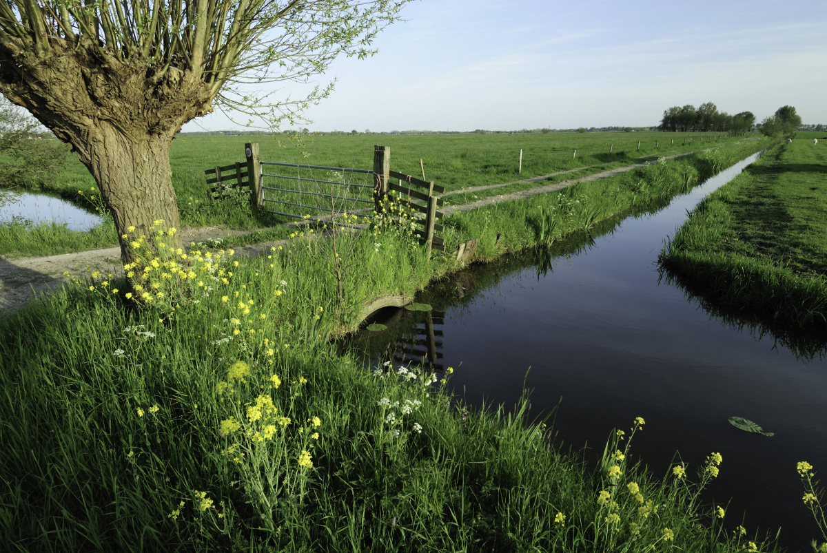 Polder, Getty Images