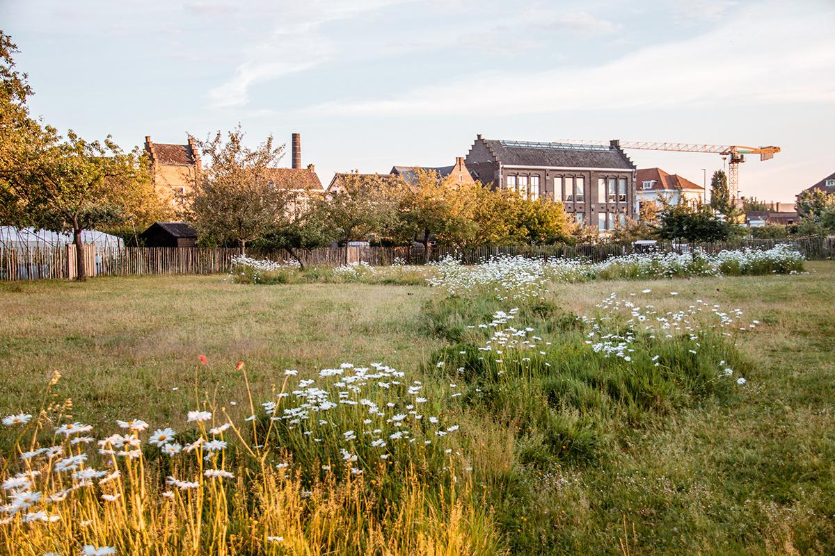 Oudenaarde is een bijenstad en laat gras en bloemen op verschillende locaties bloeien en groeien. Hier in de volkstuinen., Oudenaarde