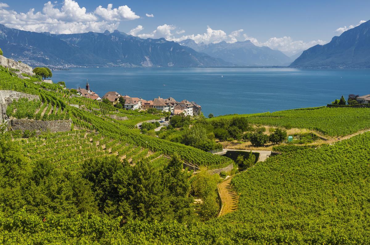 Vue sur le village de Saint-Saphorin depuis les vignes, Laurent Kaczor