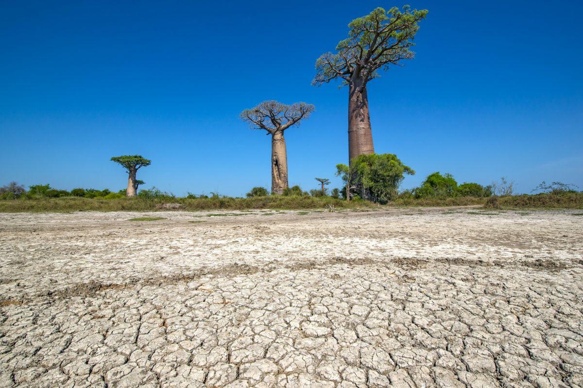 Madagaskar, Getty Images