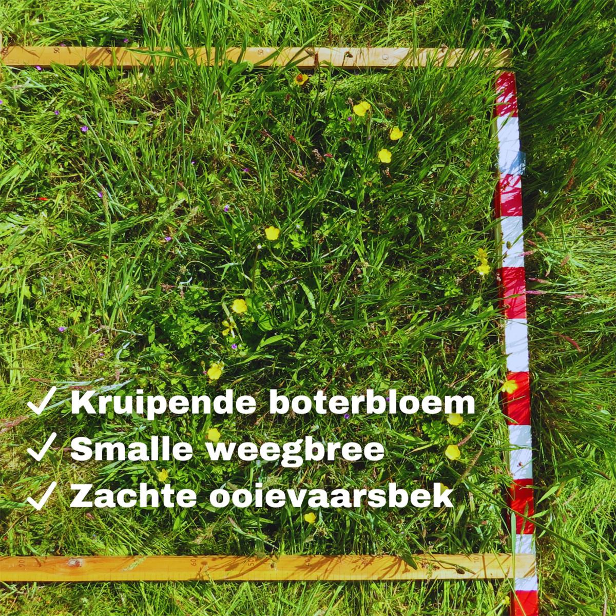 Bij het Provinciaal Natuurdomein Limburg werd enthousiast meegeteld., PNC