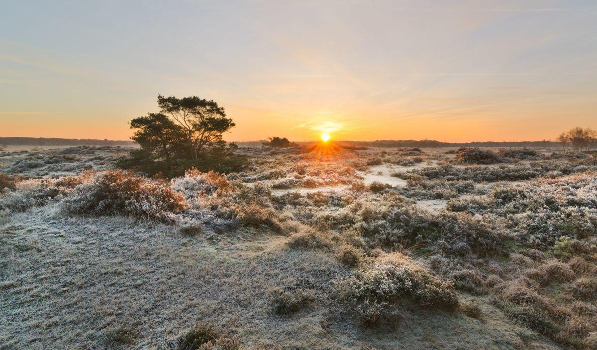 Kalmthoutse Heide, Getty Images