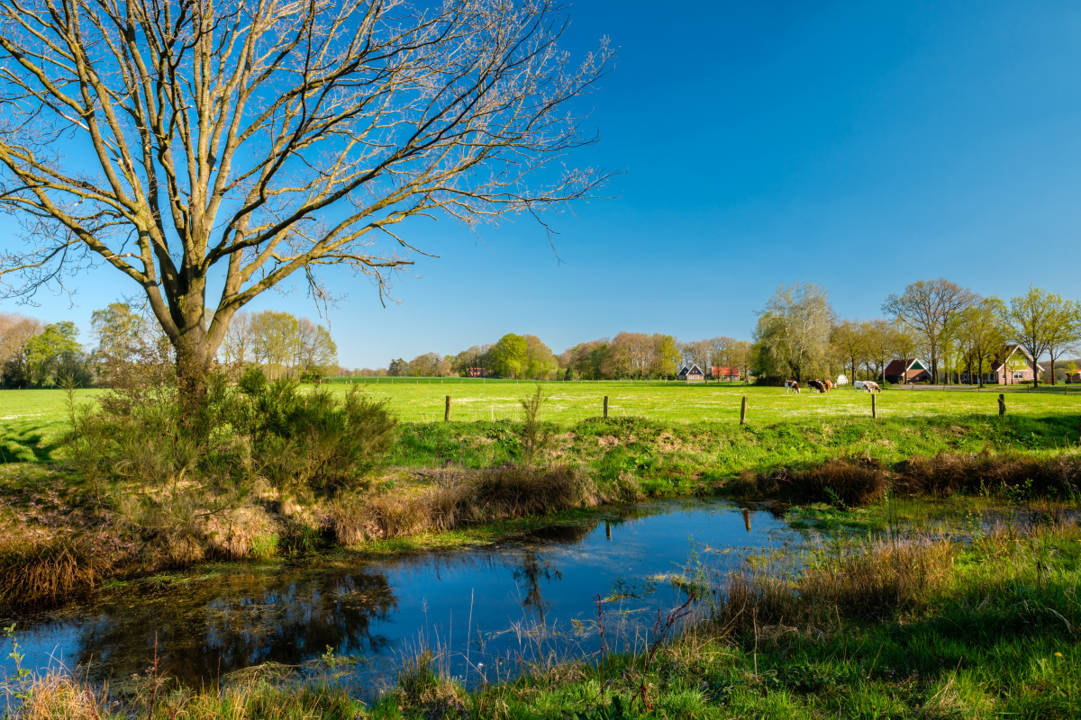 Coulissenlandschap in Twente, Getty Images