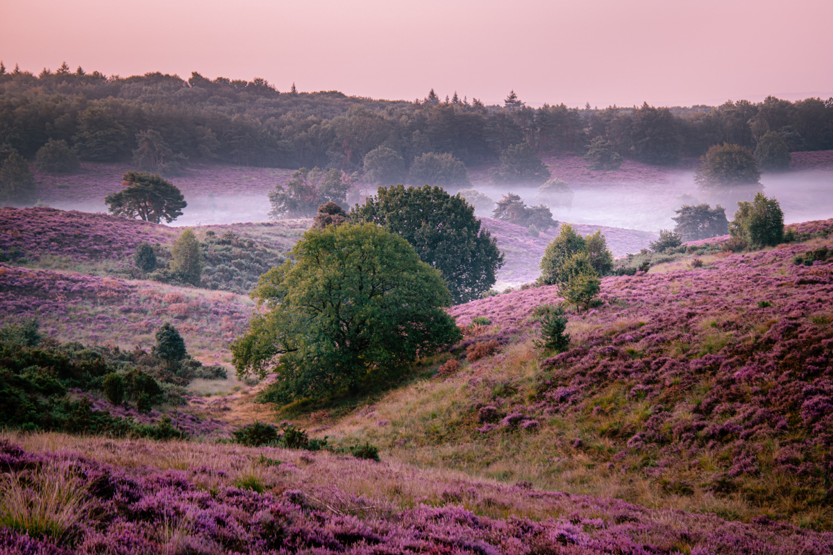 Veluwe, Getty Images