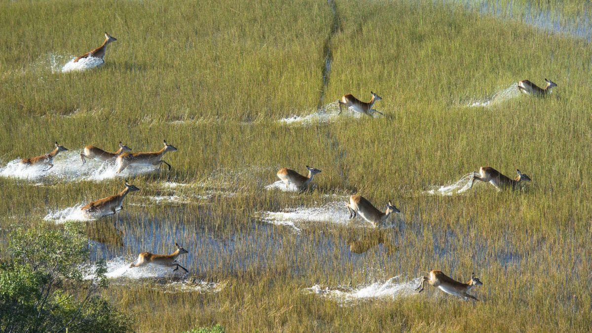 Okavango, Getty Images