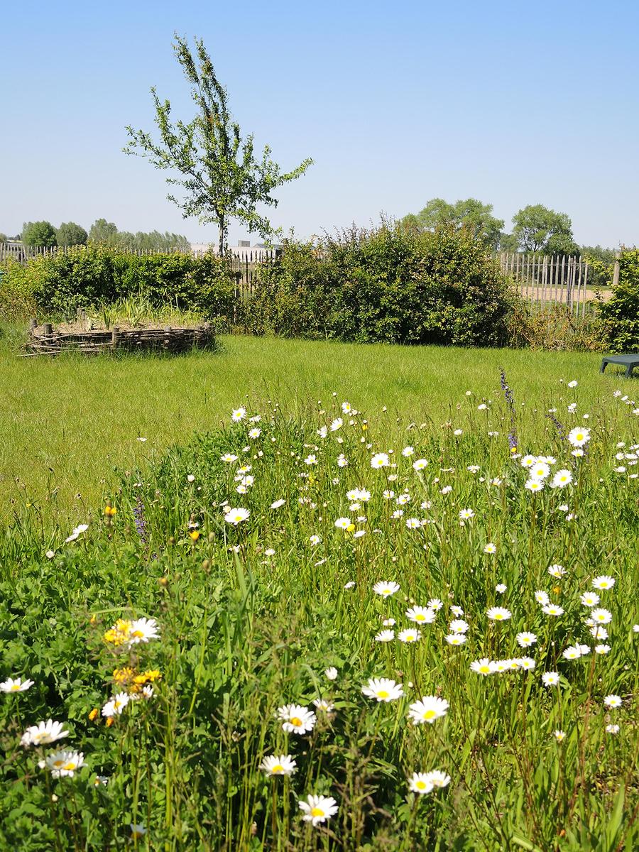 Johan De Waele koos jaren geleden al voor een tuin die wild én verzorgd tegelijk is., Johan De Waele