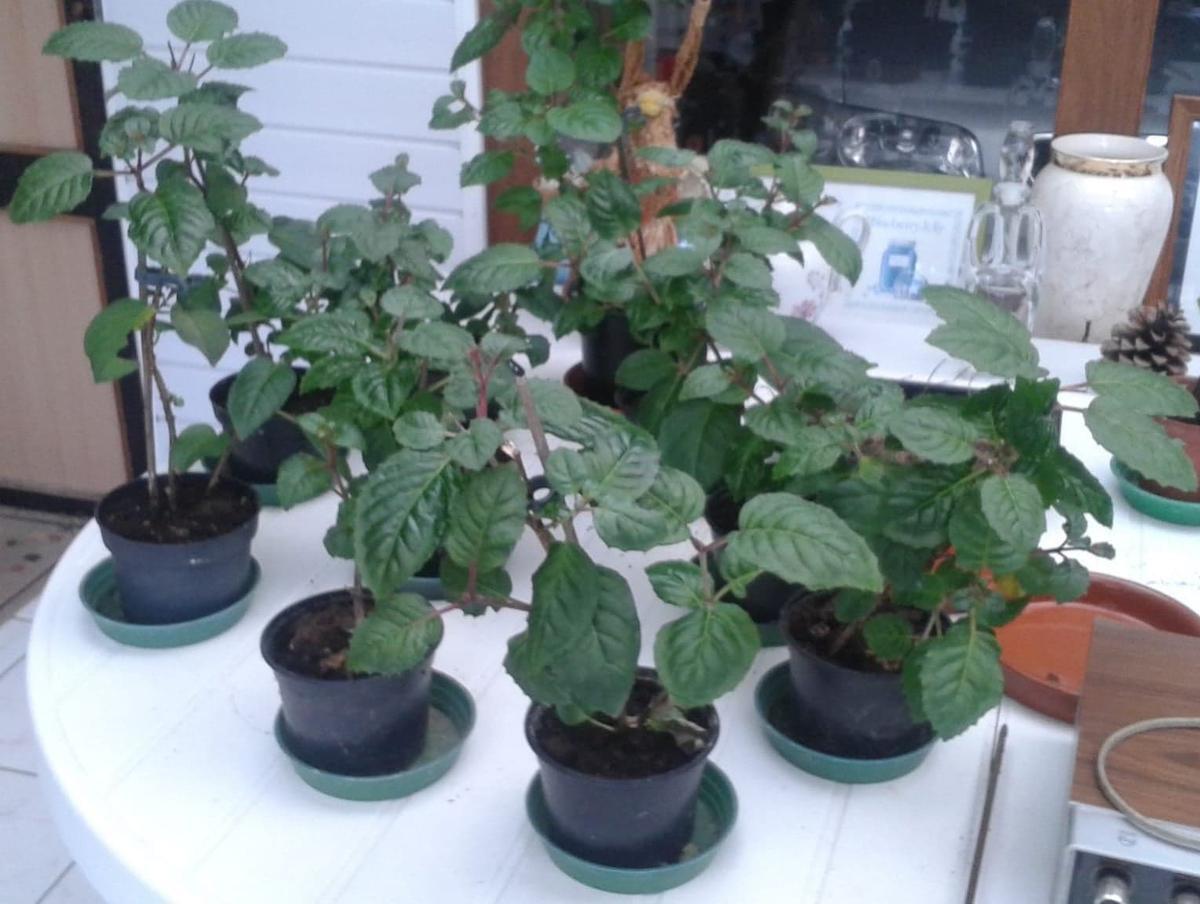 Er stonden plantjes voor elk familielid klaar bij Michel thuis., (foto TP)