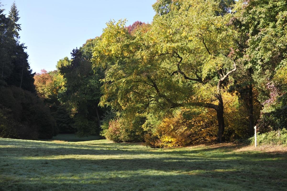 ., Arboretum Tervuren
