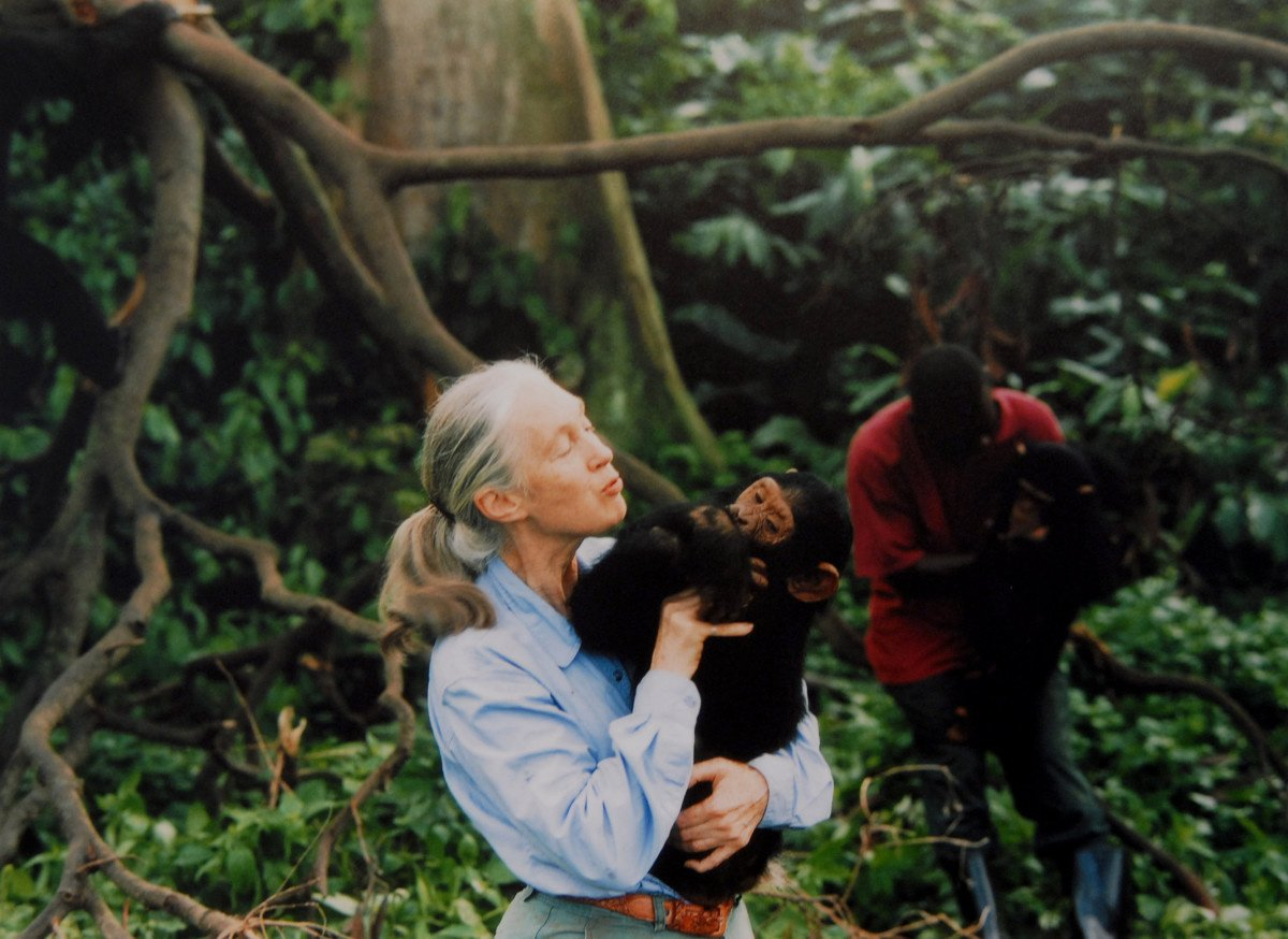 Jane Goodall in 1995, Getty Images