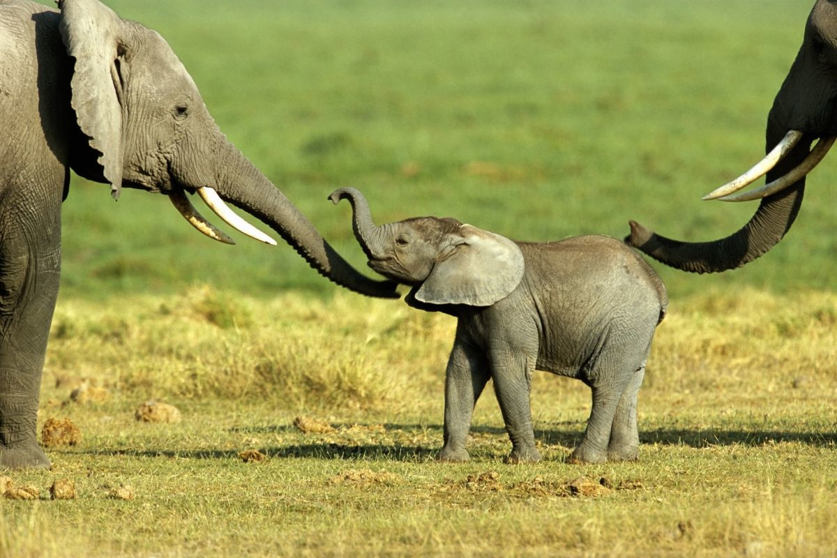 Olifant, Getty Images