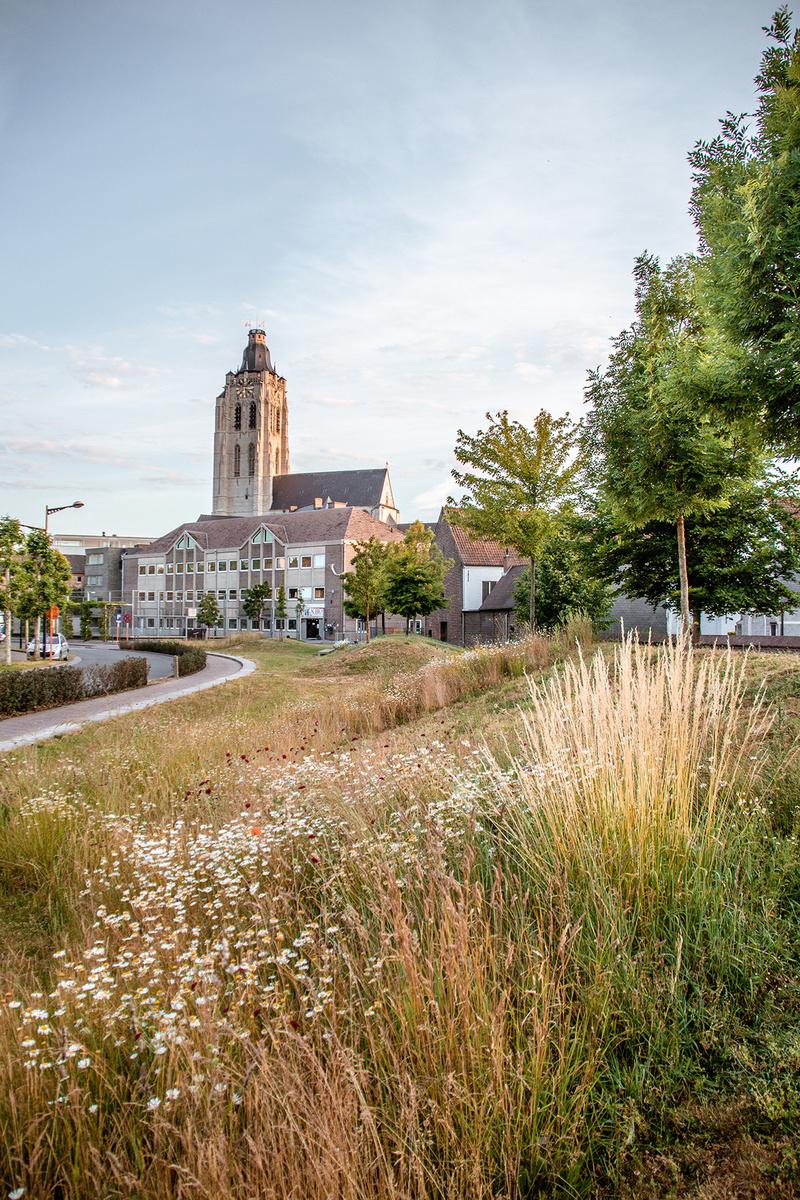 Oudenaarde is een bijenstad en laat gras en bloemen op verschillende locaties bloeien en groeien., Oudenaarde