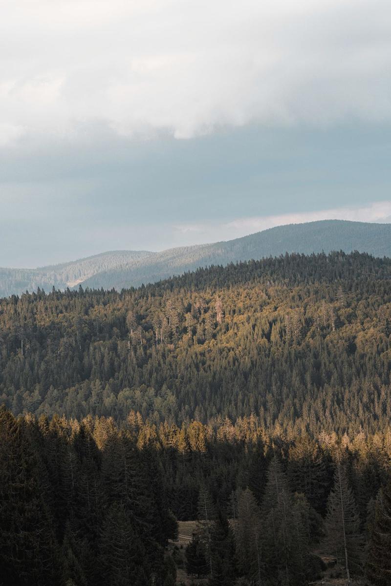 La Forêt-Noire dissimule plein de richesses insoupçonnées., Unplash/Michel Annaert
