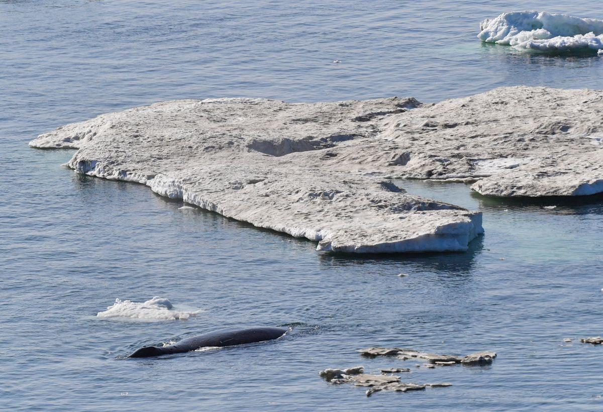 Chukchi zee, Getty Images
