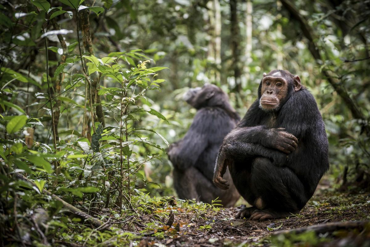 Oeganda, Getty Images
