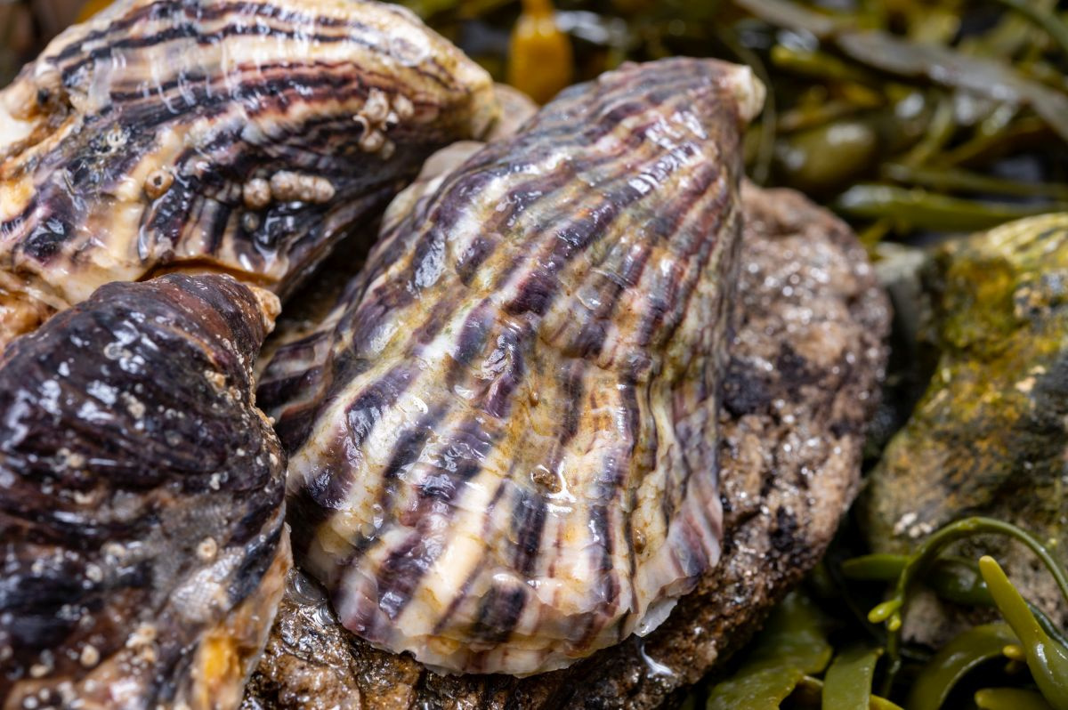 Japanse oester, Getty Images