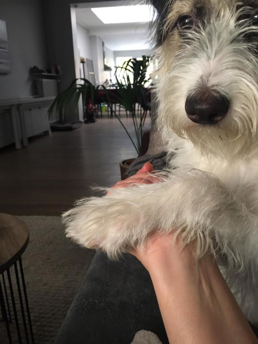 Dora, het Roemeense straathondje, heeft enkel hechtingshormonen voor Ann., FB