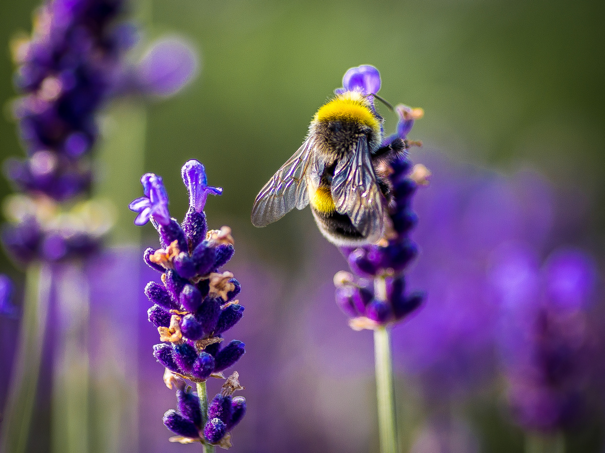 Hommel, Getty Images
