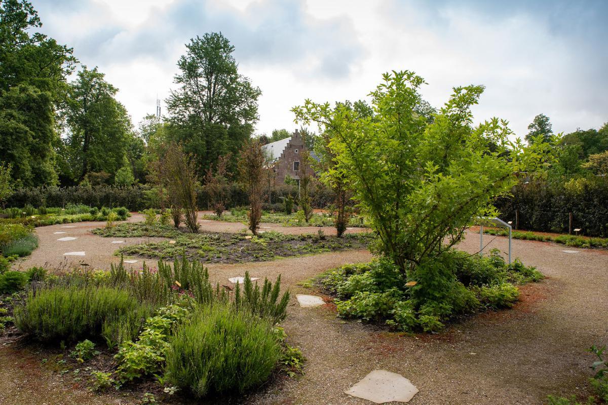 Geuren- en kleurentuin, Plantentuin Meise