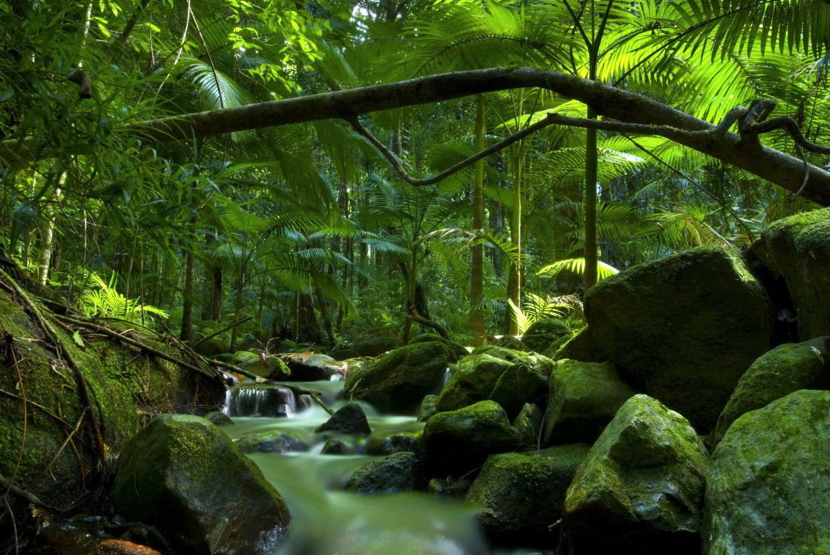 Daintree, Getty Images