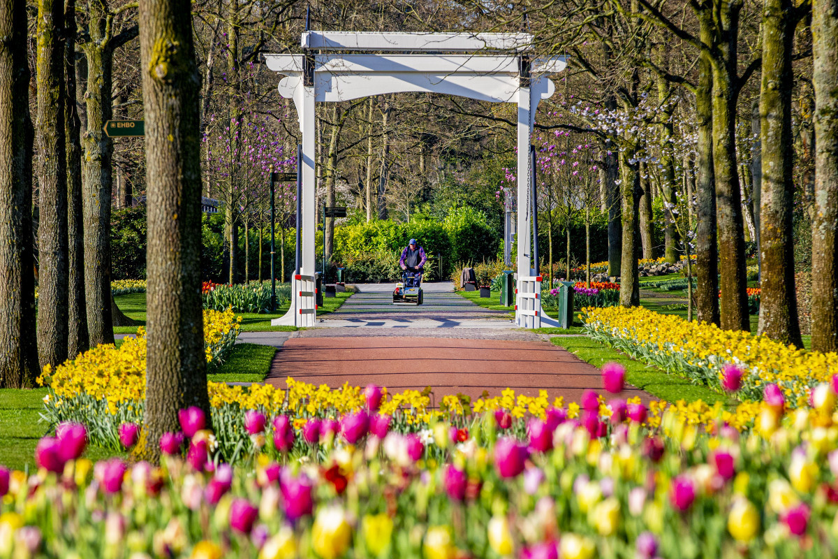 Keukenhof, Getty Images