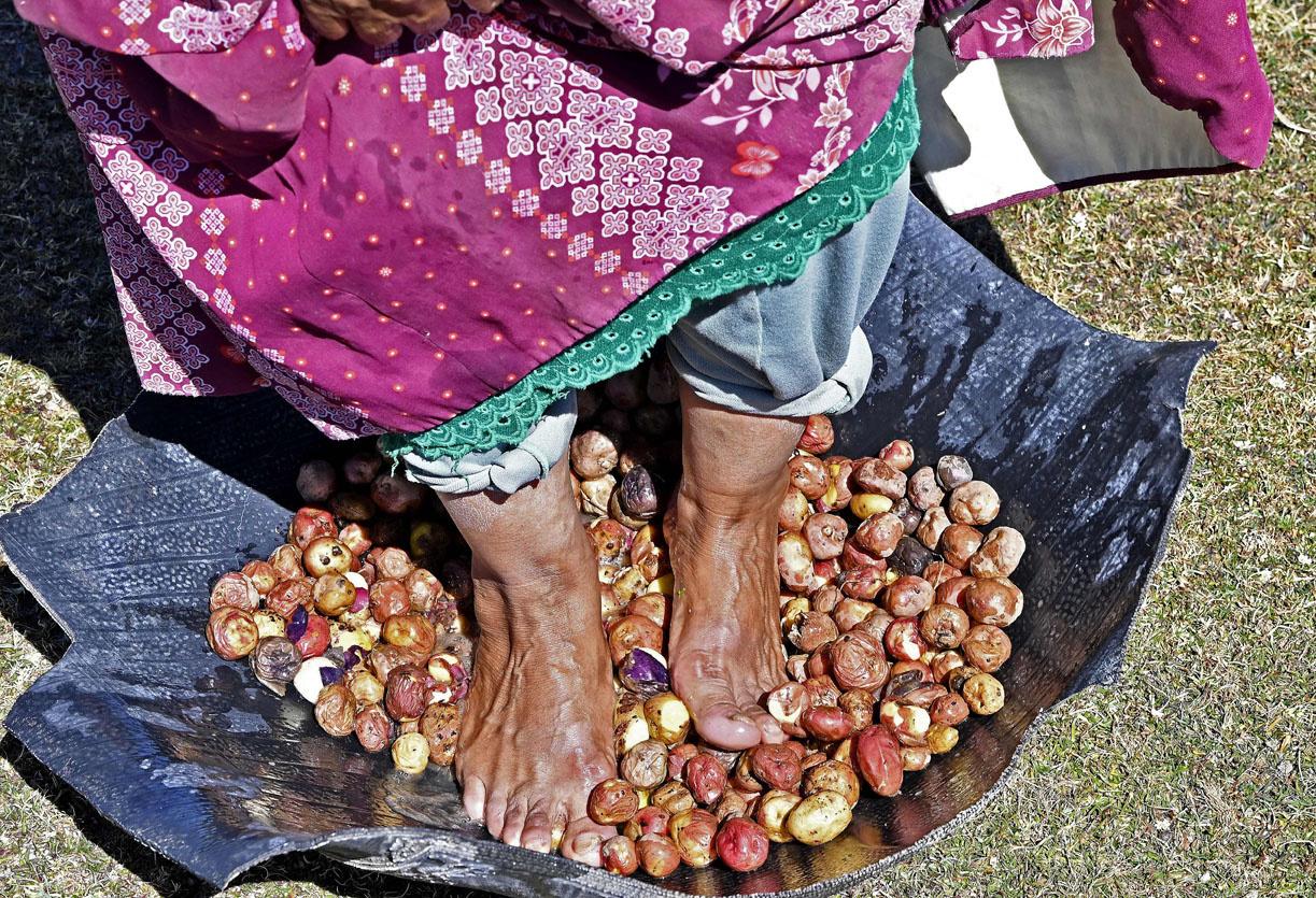"""Le chuño, secret des Andes pour rendre les pommes de terre """"éternelles"""", AIZAR RALDES/AFP"""