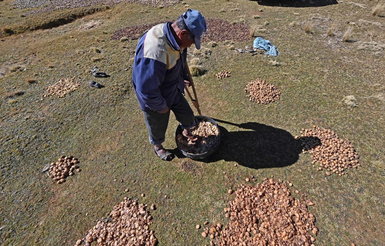 """Le chuño, secret des Andes pour rendre les pommes de terre """"éternelles"""", AFP"""