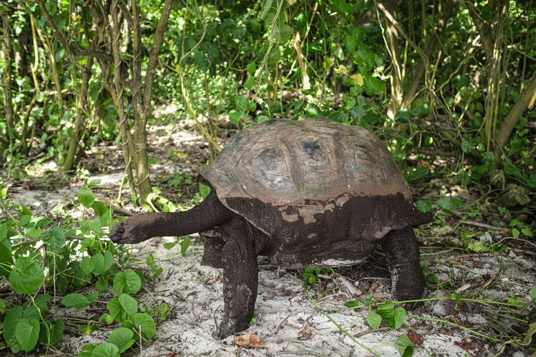 Sur l'atoll d'Aldabra, AFP