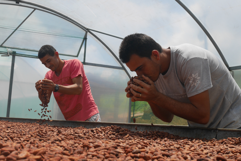 Cacaoyers de la ferme communautaire Dois Riachões, AFP