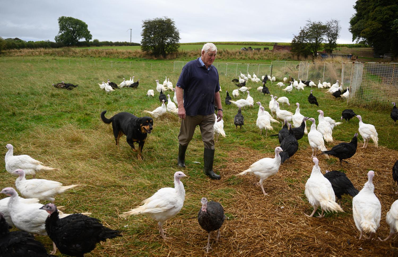 Ferme d'Eastfield Turkeys à Oxspring, AFP