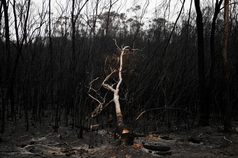 Mallacoota, Victoria., REUTERS/Tracey Nearmy