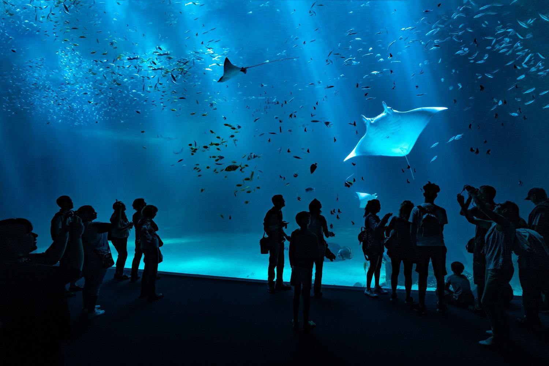 Aquarium Nausicaa, Nausicaa